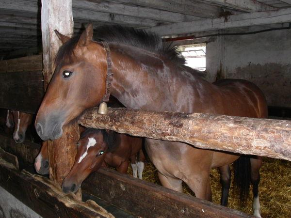 wie junges pferd angaloppieren